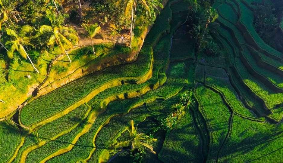 UBUD AND AROUND The history of tourism in Bali started in this very region.