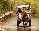 Board a horse cart to navigate the Northwest countryside; beautiful