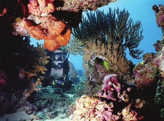 There are shallow coral dives perfect for inexperienced divers, as well as more challenging reef- and wreck dives.