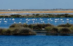 Doñana is well known for its enormous variety of bird species, geese and colorful colonies of flamingos. It is a very important nature reserve for the Lynx. Some of them are being damaged by people.