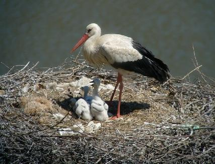 STORKS IN DOÑANA NATIONAL PARK Doñana National Park is located in the south west of Spain, in the wonderful region of Andalucia, between the provinces of Huelva and Cádiz.