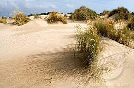 Doñana is one of Europe's most important wetland reserves and a major site for migrating birds.