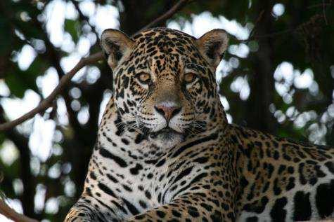 Join the Houston Zoo for a very special trip: Brazil s Pantanal: South America s Savannah July 21 to July 29, 2018 US $7,999 per person (double occupancy) US $1,000 single supplement The Pantanal is