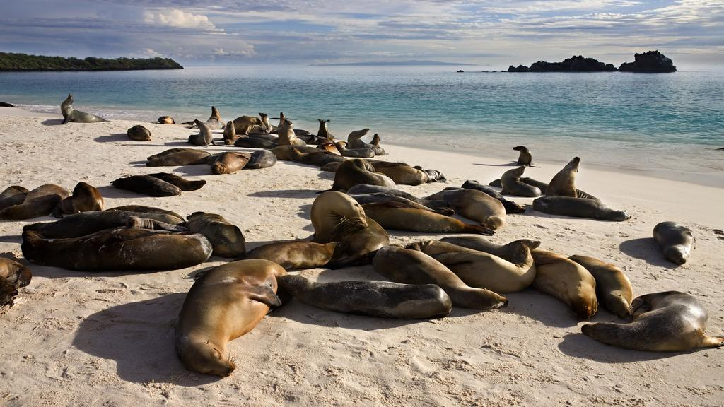 Cruising through the eastern islands you will visit colonies of sea lions and winged albatrosses on Española Island and snorkel with hammerhead sharks.