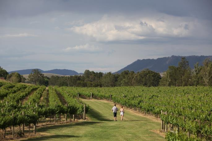 After leaving the Park travel directly via the Freeway into the Hunter Valley to enjoy exclusive wine and cheese pairing at a boutique winery with stunning views.