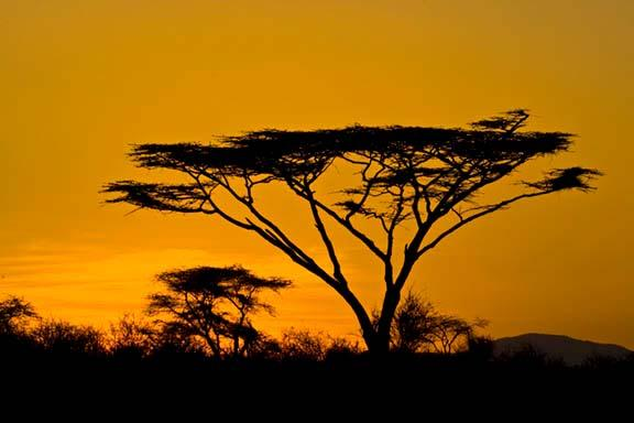 This gives us the best opportunities to photograph this incredible beauty. Flat Top Acacia at Sunset Canon EOS 1DMark III, 100-400mm f/5.