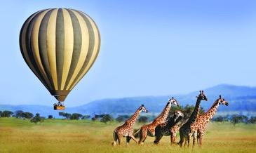 Launching at dawn, rising as the sun rises, you gently float over the plains of the magnificent Serengeti.