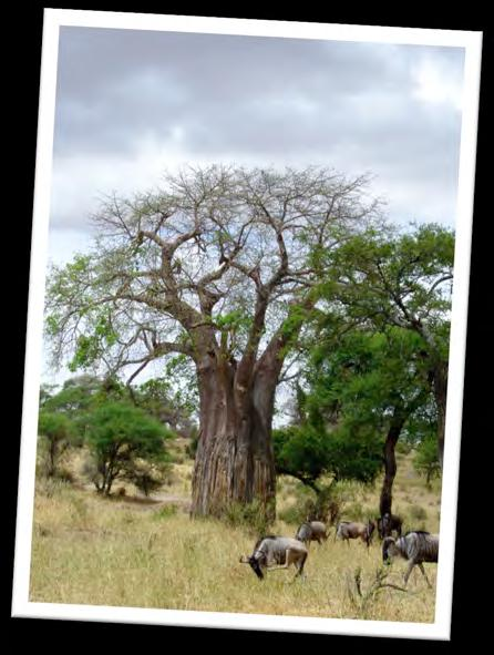 the overused tourist paths, and African wildlife safari viewing. Non-runners welcome to join.