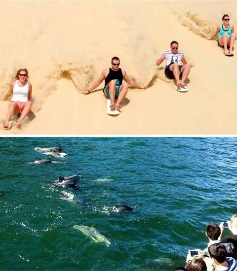 The cruise will depart from Nelson Bay Marina at 1.30pm. Search for the pods of bottlenose dolphins.