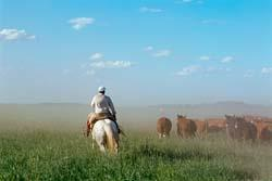 Physical Geography Pampas The Pampas fertile soils enable ranchers to raise cattle and