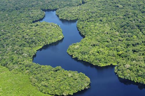 Climates of Latin America Rain Forest: Only covers 7 % of the earth s surface, yet nearly one half of the world s species of plants and animals are found there.
