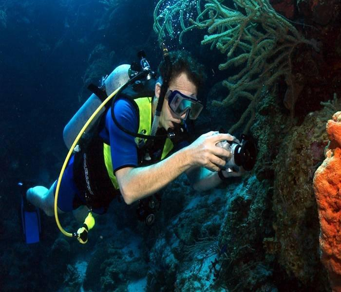 Valuation: Dive Tourism Net annual revenues of over $2 billion in 2000.