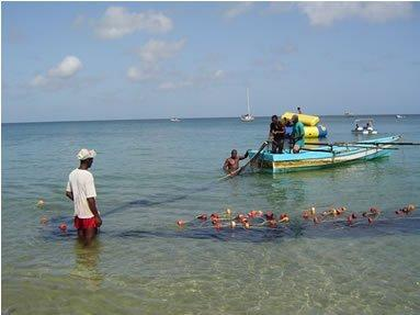 Coral reef-associated fisheries valuation example for Tobago important for cultural tradition, safety net, and livelihood provide annual economic benefits estimated at between US$0.8 1.
