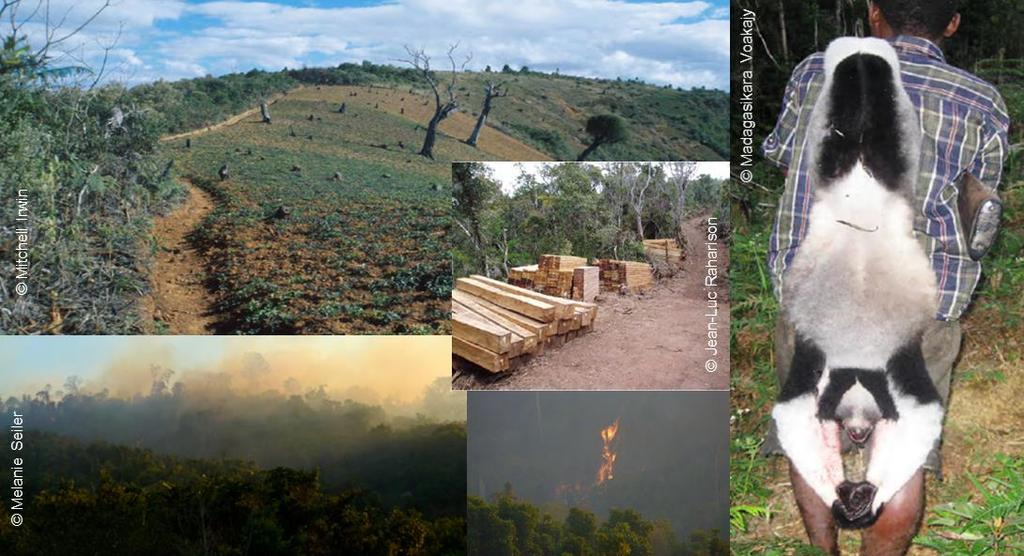 logging, hunting and slash-and-burn agriculture to name a few.