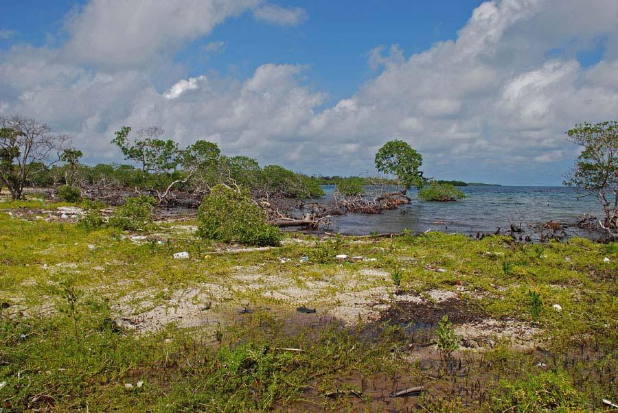 October 2007 ~25 m In the 6 months since the small mangrove island Manatee Cay was cleared and filled, the shoreline has eroded approximately 25 meters.