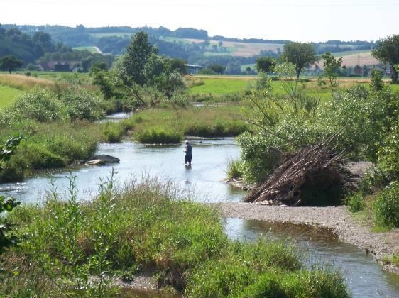 Nevertheless, a fish ecological monitoring proved an enhancement of fish species and biomass, and the nase and barbel spawned on the new gravel banks.