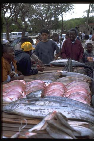Fish Market and Processing Fish: Mainly drying and salt main market is Mainland Massing and Manica Small fish don t