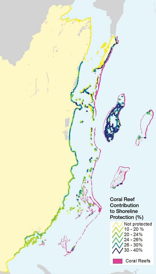 Reefs and mangroves also protect coastal properties from erosion and wave-induced damage, providing an estimated US$231 to US$347 million in avoided damages per year.