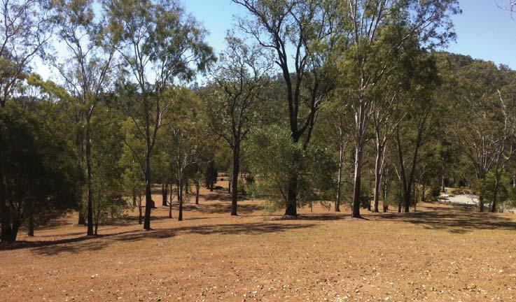 From Lake Manchester, you can walk or ride the trails to Gold Creek Reservoir and Enoggera Reservoir, venture further into the adjacent
