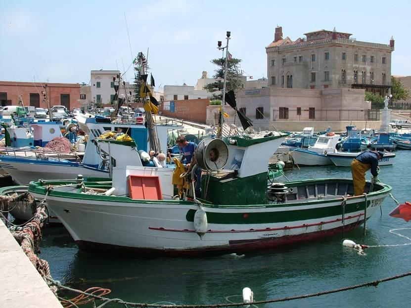 Egadi have also a very important professional fishing fleet: