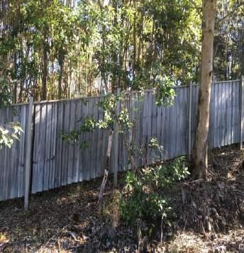 30 cm gaps under fences for koala movement.