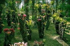 This private botanical garden is home to a staggering number of begonias, bromeliads, bamboo and about 300 different types of palm trees.