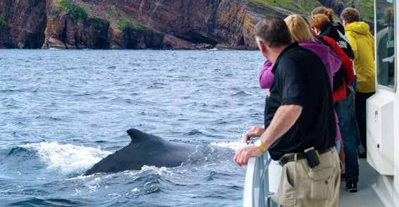 Bay Bulls Boat Tour Program Highlights Spend 11 days discovering the remote and stunning beauty of the province of Newfoundland and Labrador Canada s eastern-most treasure. Enjoy beautiful St.