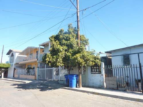 The photographs above show avocados in residential areas in Tijuana Mexico that were