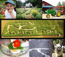FOR AGRITOURISM FARMERS Are there customers to support my tourism ideas?