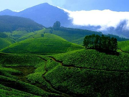 Day 6 Nov 30 - Madurai Munnar (B, L, D) Munnar is in the Cardamom Hills, which stretch right down eastern border of Kerala to the southern tip of India, and at 1,700 metres above sea level, it is