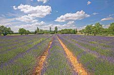 Provence The Provence region is truly considered as a must see for those who wants to discover the most authentic