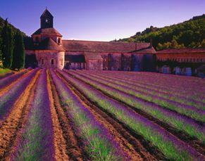 Luberon Senanque Abbey Located in a wild isolated valley just north of Gordes, the Abbaye Notre-Dame de Sénanque is a