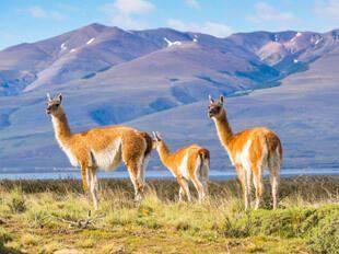 Day 2 TRANSFER TO PUERTO NATALES Transfer to the airport to catch a flight to Punta Arenas. Meet your driver in Punta Arenas and take a road trip by coach to the neighboring city of Puerto Natales.