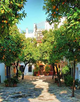 The neighborhood is the location of many of Seville's oldest churches and is home to the