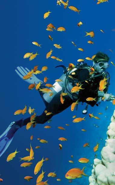 Diving Tours Shark Bay is an area that is rich in a diverse array of marine life,