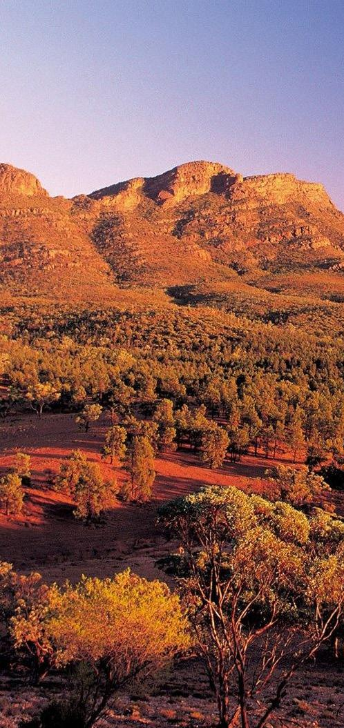ITINERARY ITINERARY ITINERARY DAY 1 DAY 2 DAY 3 ARRIVAL All flights arrive into Adelaide aiport by 10:00am. ADELAIDE AND FLINDERS RANGES Transfer to Adelaide Parklands Terminal to board The Ghan.