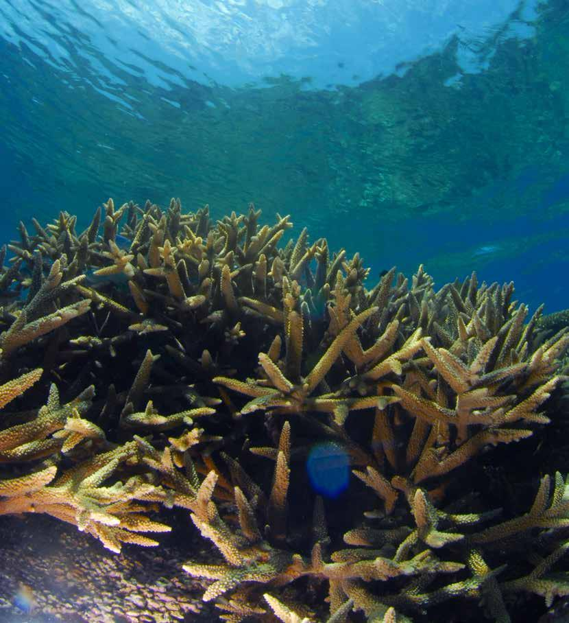Communicating the Economic and Social Importance of Coral Reefs for South East Asian