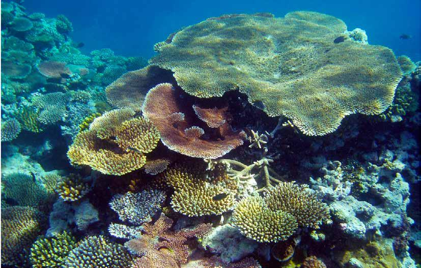 South East AsiaFactsheet REGIONAL DATA Estimates show the 70,000 km 2 of reefs in the region provide tangible benefits of US$10.6b annually to the economies of the countries.