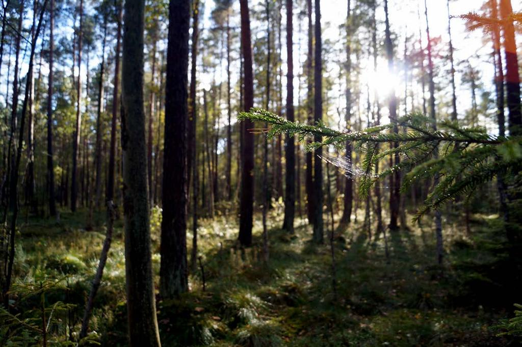 EUROPE / NORTH AMERICA BIALOWIEZA FOREST (Extension and renomination of