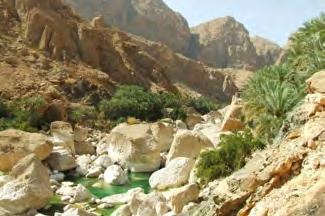 Possible activity along the transfer Wadi Tiwi 1h-5h Drive inside this fantastic wadi up to the first village and enjoy the scenery.