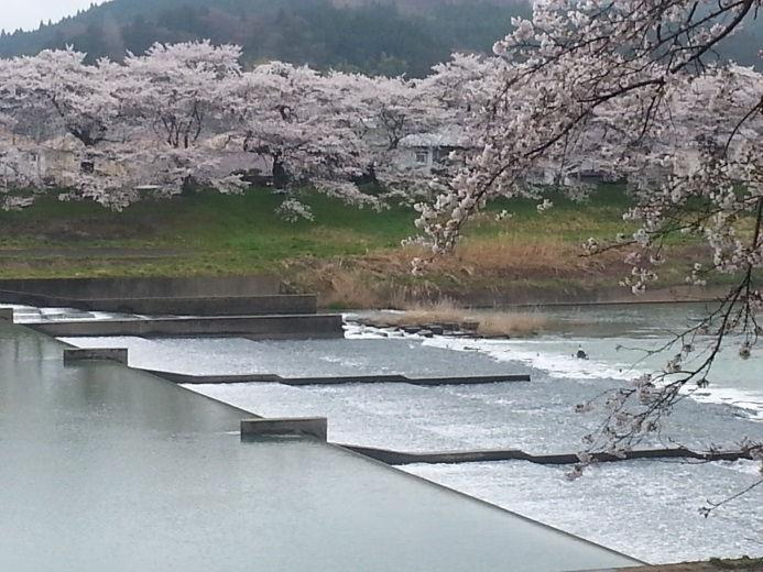 district which is famous for its riverbank-lined 1,000 cherry blossom trees. To get there is only 40 minutes (25km) by train from downtown Sendai.