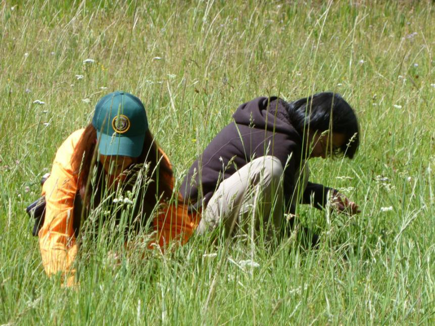 Identifying invasive plants in