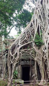 This former monastery is still surrounded by the jungle Check in Dinner at a local restaurant with traditional Apsara dance Overnight in Siem Reap TUESDAY, JUNE 19 Tour Angkor Wat dedicated to the
