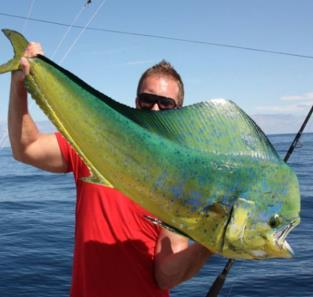All billfish species are catch and