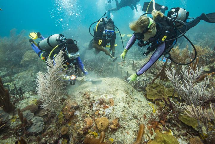 These restoration activities encompass restoring the entire ecosystem, including increasing success of natural coral reproduction (capturing larvae and growing them in safe environments), rescuing