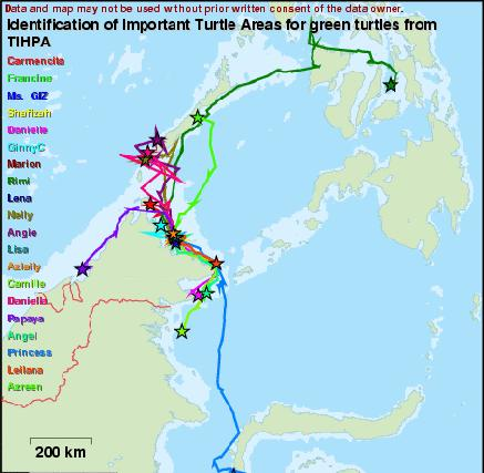 Benefits on the Regional Engagement: Sea Turtle Marine Protected Area Network - Sea turtle research in the Philippines and Malaysia using the following methodologies: laparoscopy in Tubbataha,