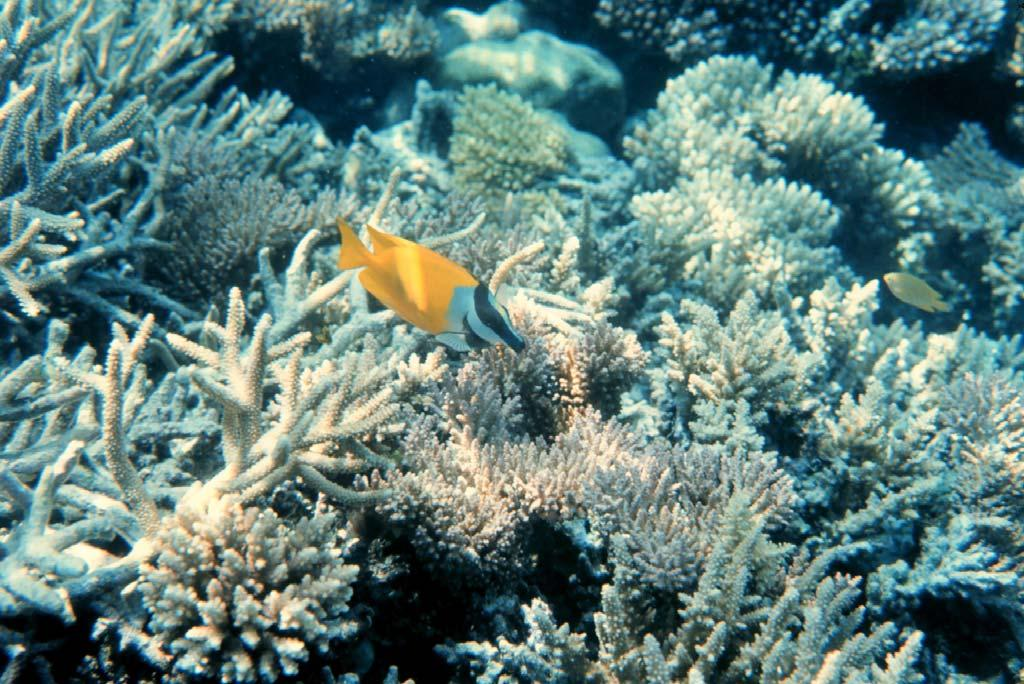 Ecology: Coral Reef Ecosystems