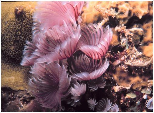 CD: NOAA Coral Lesson Plans Topics: Coral Biology Coral spawning Morphology of corals Feeding adaptations Coral Reef and Deep Sea Coral Ecology How corals