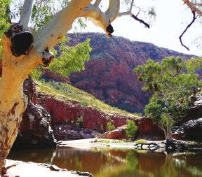 history of Australia s Traditional Owners Swim in the pristine waters of Glen Helen Gorge Trip hosted by one of Travel, Play, Live s key team members Trip Duration 7 days Trip Code: WLAR Grade