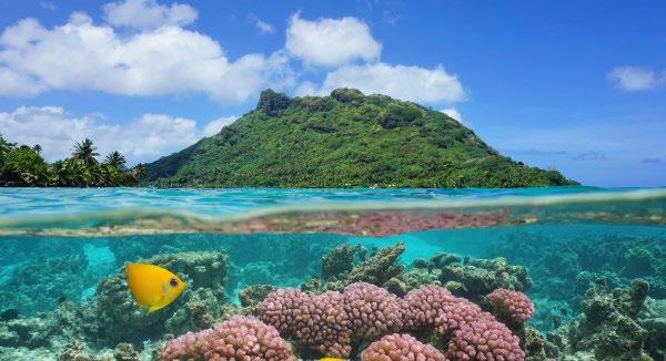 TAHITIAN TREASURES $ 5499 PER PERSON TWIN SHARE THAT S % 45 OFF TYPICALLY $9999 PAPEETE MOOREA BORA BORA HUAHINE AUCKLAND THE OFFER Tahiti looks nice.